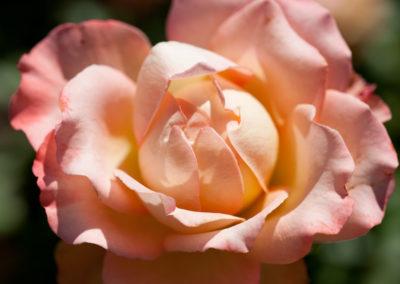 rosa Virna Lisi